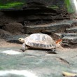 Freshwater turtles. — Stock Photo #32160737
