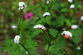 Worm flowers — Stock Photo