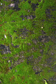 Closeup old Stone Overgrown with Green Moss in forest — Stock Photo
