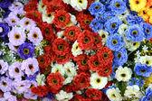 Krásné barvy plastových květin — Stock fotografie