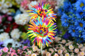 Beautiful colors of plastic flowers — Stock Photo