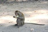 Feeding a monkeys — Stock Photo