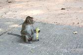 Alimentazione un scimmie — Foto Stock
