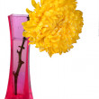 Yellow chrysanthemums in pink vase — Stock Photo