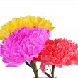 Mix colorful chrysanthemum — Stock Photo