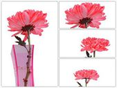 Red Chrysanthemum Flowers in vase collection — Stock Photo
