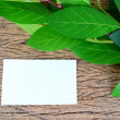 Green leaves and blank card — Stock Photo