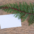 Stock Photo: Green leaves and blank card