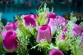 Rosa rose — Stockfoto