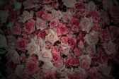 七彩玫瑰背景 — 图库照片