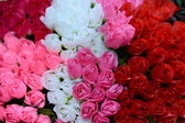 Colorful roses background — Stock Photo