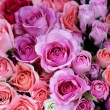 Stock Photo: Colorful roses background