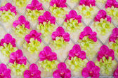 Orchid texture — Stock Photo