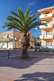 Lush palm tree on a sunny day at Bosa Marina, Sardinia, Italy. — Stockfoto