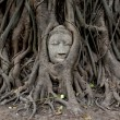Tree growing around the head of a Buddha at Wat Phra Mahathat, Ayutthaya. — Stock Photo