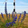 Flora in front of the Dungeness Lighthouse. — Stock Photo