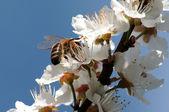 Beee — 图库照片