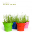 Stock Photo: Green grass in buckets