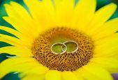 Wedding rings on yellow sunflower — Stock Photo