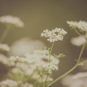 Delicate flowers vintage background — Stock Photo