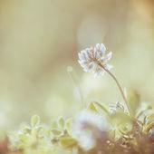 Gentle vintage flowers background — Stock Photo