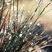 Dew and grass vintage background — Stock Photo