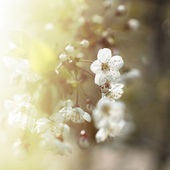 Spring flowers at sunrise — Stock Photo
