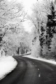 Country road in december — Stock Photo