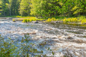 Wild River in Forest — Foto Stock