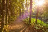 Coucher de soleil dans les bois — Photo