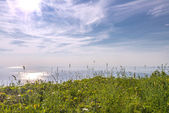 Blossoming grasses in front of ocean — Stock Photo