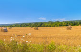 Farm field with hay bales — Stock Photo