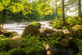 River in the forest — Foto Stock