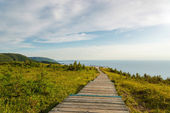 Skyline Trail boardwalk — Stockfoto