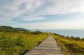 Skyline Trail boardwalk — 图库照片