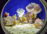 Marine animals — Stock Photo