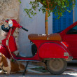 Dog  near red car — Stock Photo
