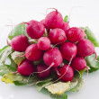Bunch of fresh radishes on a white background — Stock Photo