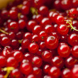 Redcurrant — Stock Photo #24735155