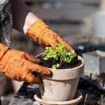 Planting — Stock Photo #24736025