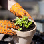 Planting — Stock Photo #24736027