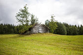 Old wooden shed — Stock Photo