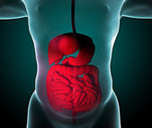 Man and digestive tract, intestines — Stock Photo