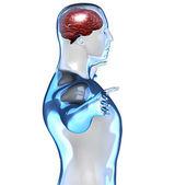 Gehirn von der seite in einem körper betrachtet — Stockfoto