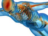 Human body and skeleton — Stock Photo