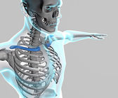 X ray of human body and skeleton — Stock Photo
