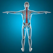 Spine x-ray skeleton — Stock Photo