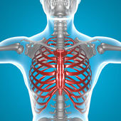 X-ray thorax — Stock Photo