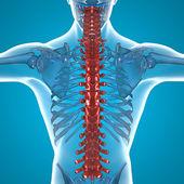 Ryggraden röntga skelettet — Stockfoto
