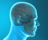 Image of human skull — Stock Photo